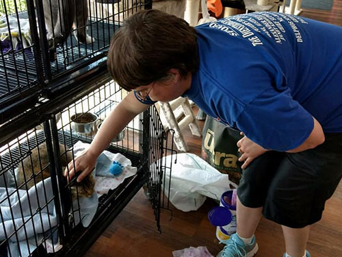 adult services pet store, someone reaching in a cage to pet a cat